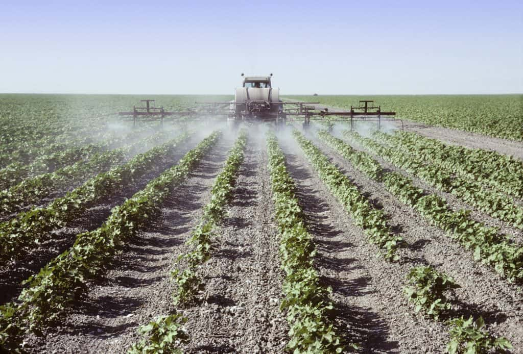 Spraying young cotton plants in a field